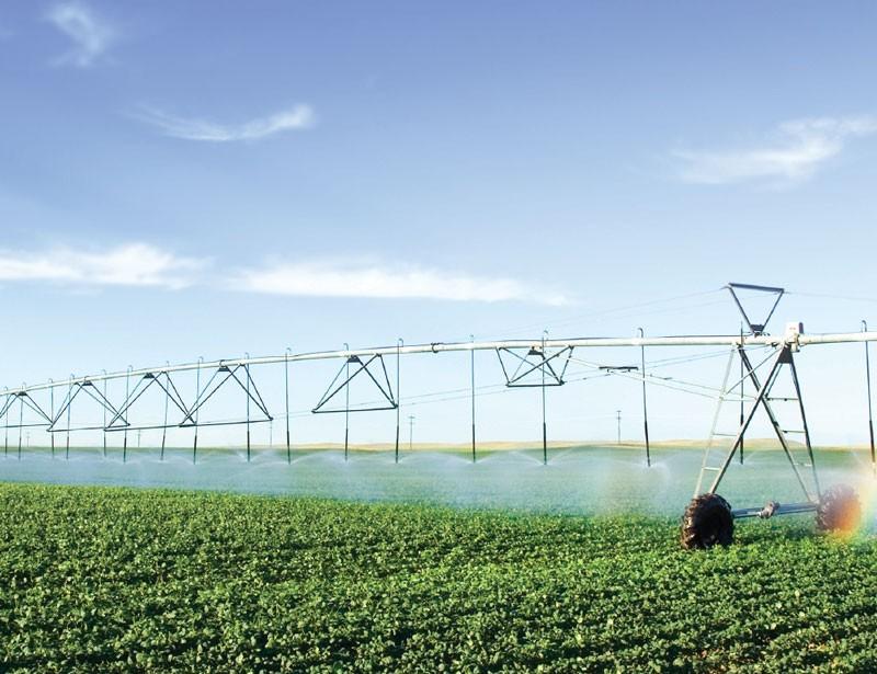 /content/dam/pcorp/photos/businesses/farms-irrigation-dairy/farmer-irrigation.jpg